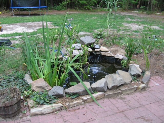 Small goldfish pond - photo#15